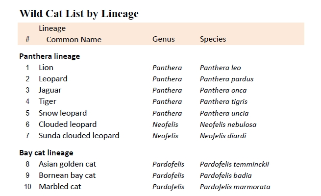 Wild Cat List by Lineage