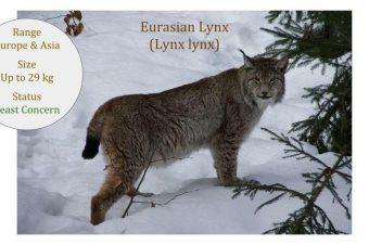 IUCN Cat Specialist Group Library Update 2017 05 23