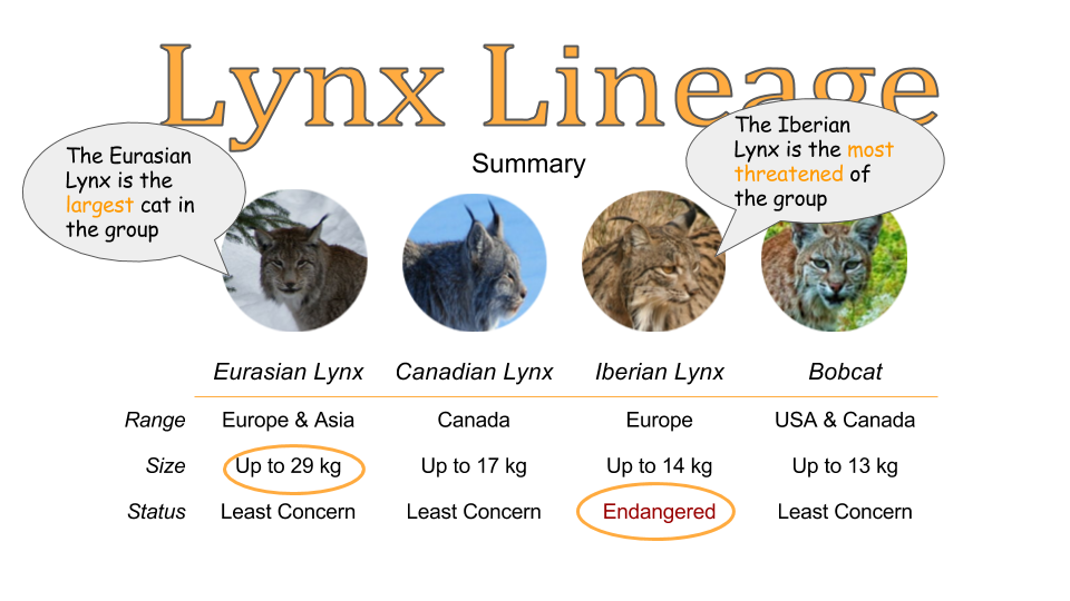 Lynx Lineage All Cats