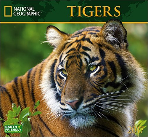 National Geographic Tigers Calendar 2017