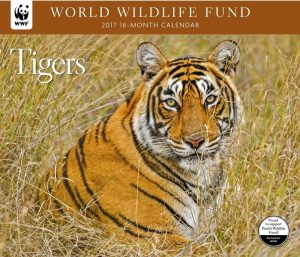 World Wildlife Fund Tigers Calendar 2017