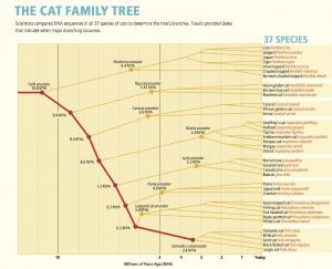 Felidae Family Tree