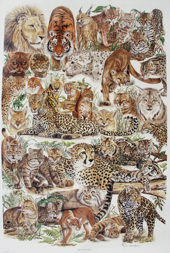 Wild Cats of the World by Ellen Chester