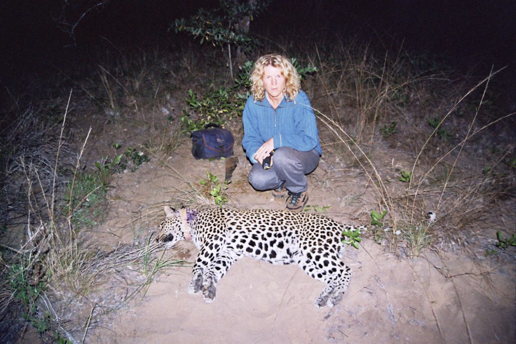 Wild Cat Research South Africa