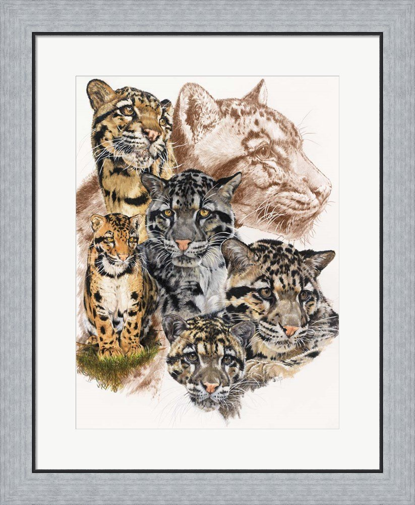 Clouded Leopard Print by Barbara Keith