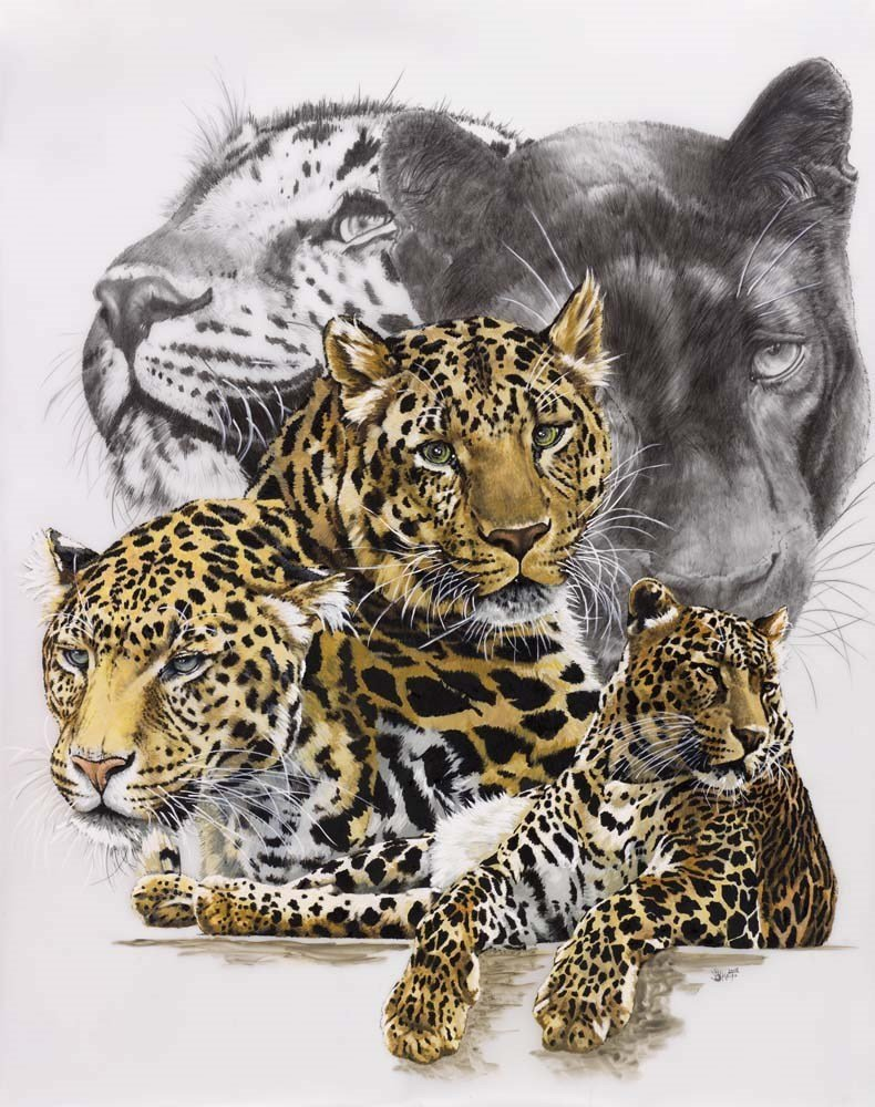 Jaguar Art - Elusive by Barbara Keith