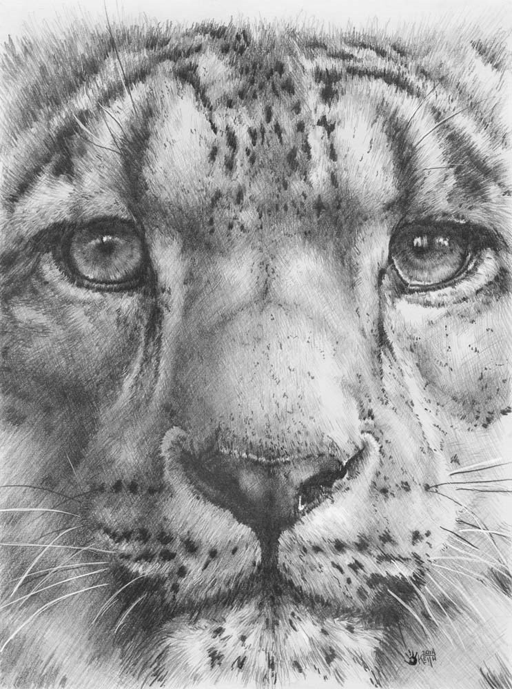 Up Close Snow Leopard by Barbara Keith Art Print