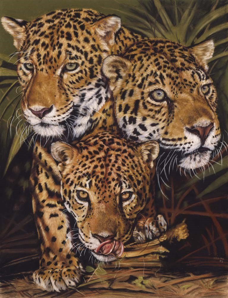 Jaguar Art - Forest Jewels by Barbara Keith