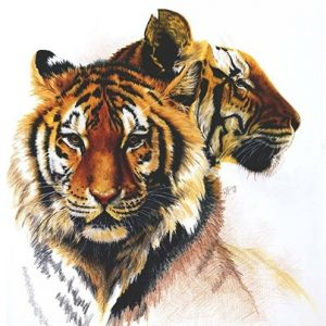 Tiger Wall Art by Barbara Keith