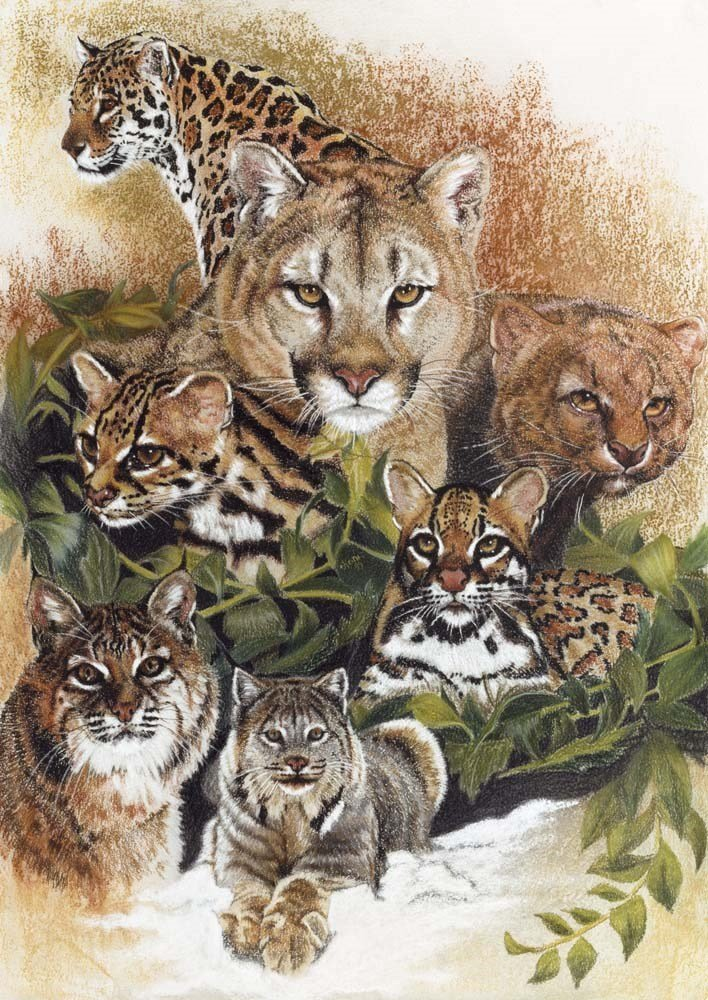 Big Cats Wall Art Big Cat Art Prints Wild Cat Family