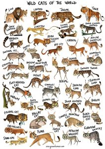 Wild Cats of the World Poster