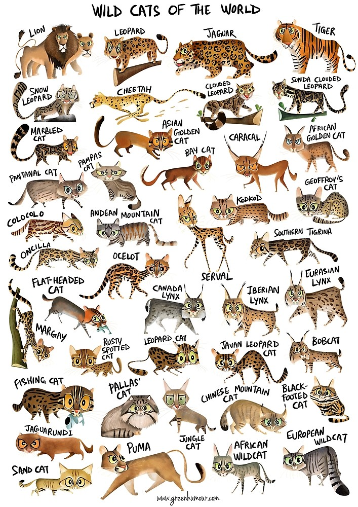 Wild Cats of the World Poster - Cartoon