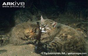Pampas Cats Sleeping - image