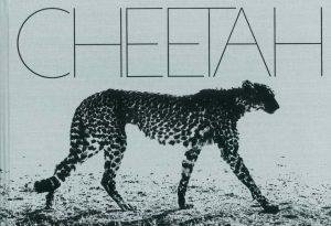 Cheetah by Mark Segal