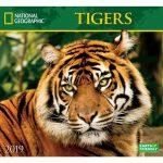 Nat Geo Tigers 2019 Wall Calendar
