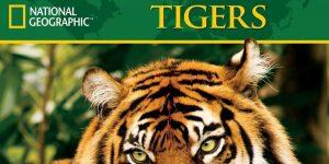 Tiger 2019 Calendar