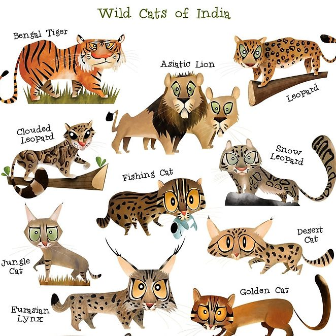 Wild Cats of India Chart
