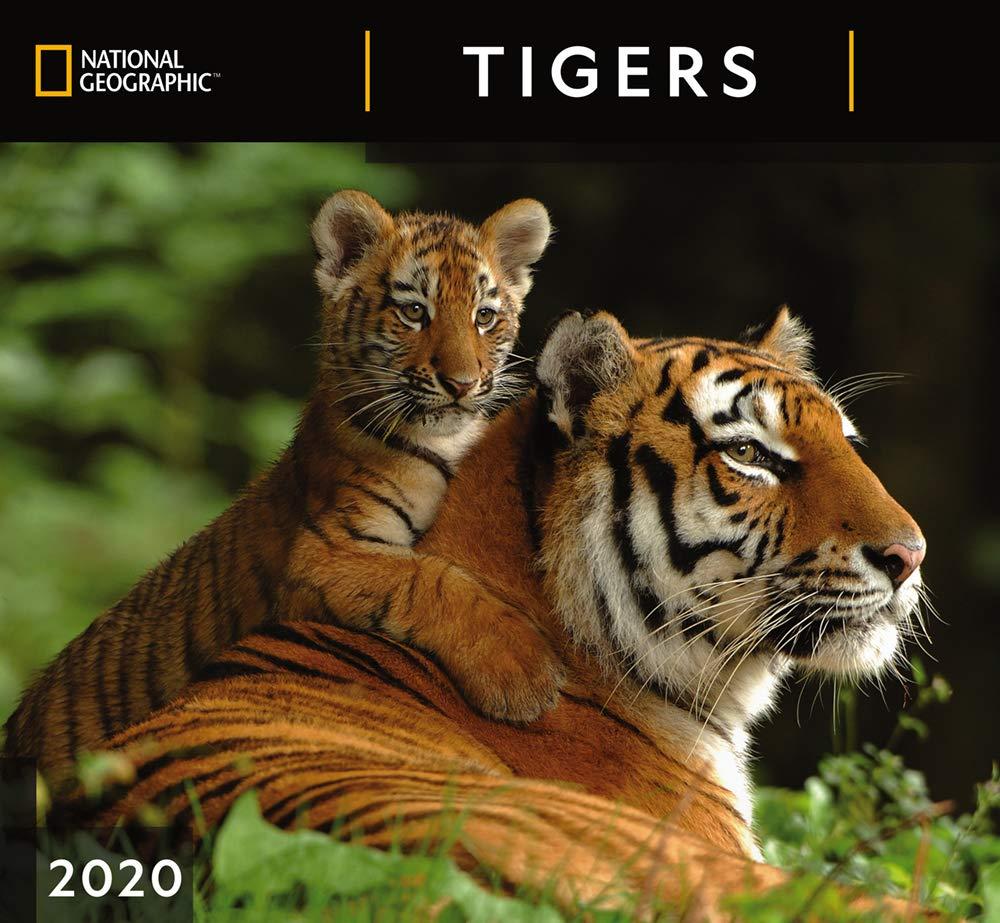 Nat Geo Tigers Calendar 2020