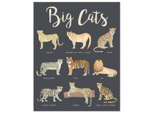Educational kids print of nine big cats