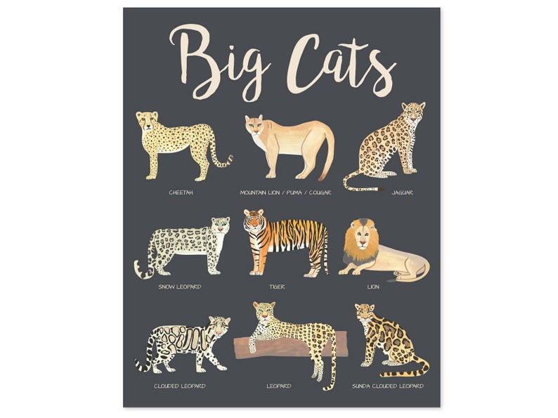 Educational kids print of nine big cats