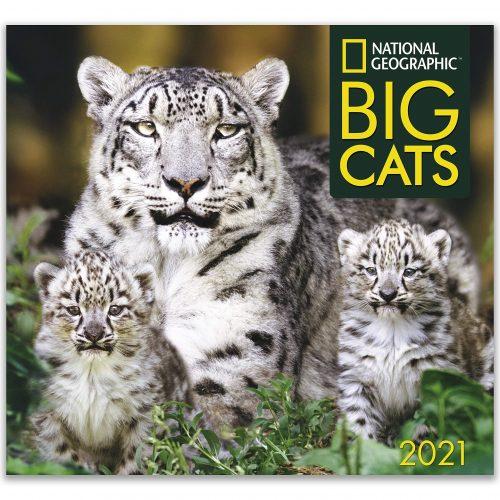 Nat Geo Wild Cats Calendar 2021