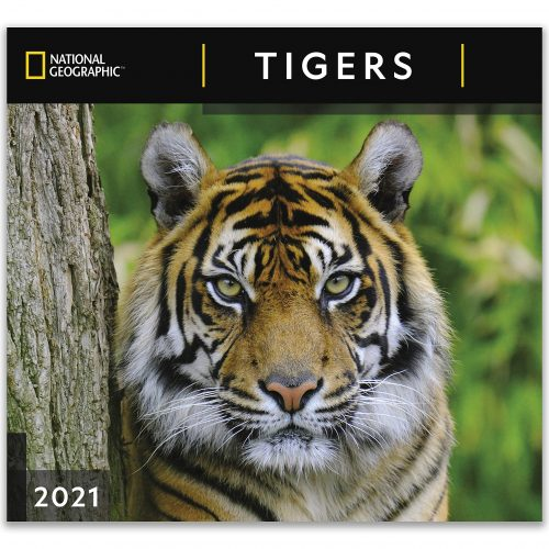 Nat Geo Tigers Wall Calendar 2021