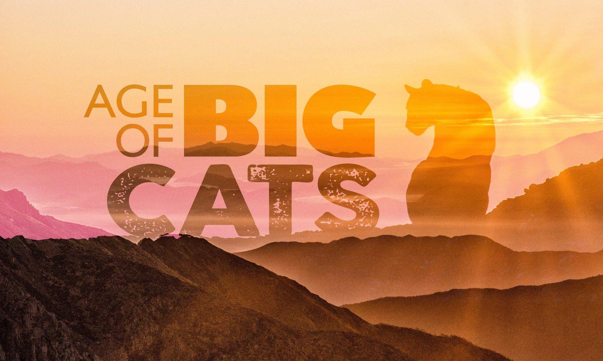 Evolution of Wild Cats Video