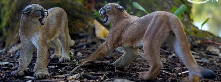 Mountain Lion / Puma / Cougar Sculpture