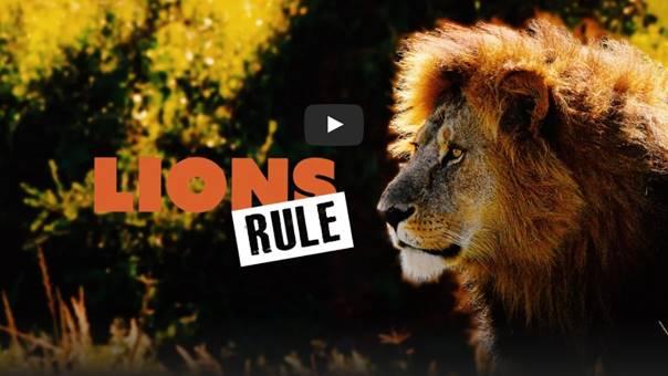 Lion doccie: Lions Rule on Curiosity Stream